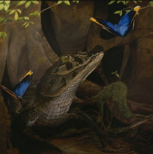 caiman_and_butterflies